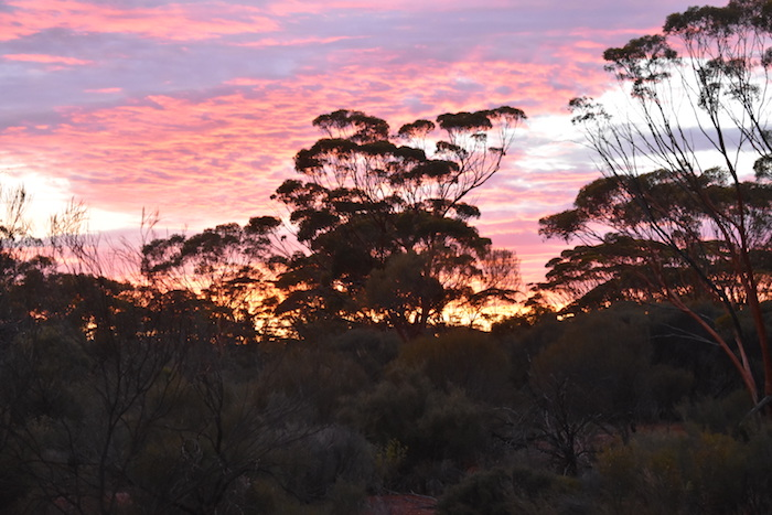 Sunset over the Great Western Woodlands.