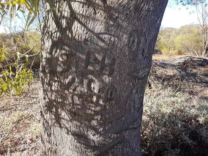 Blazed kurrajong tree.