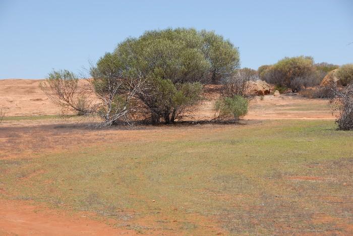 Open area at Gnarlbine Rock.