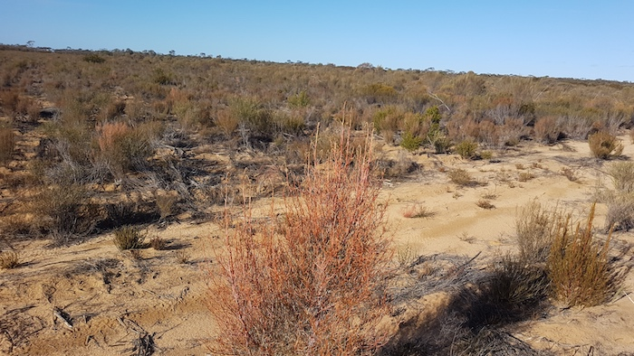 Firebreak on the eastern boundary of the Goldfields Woodland National Park.